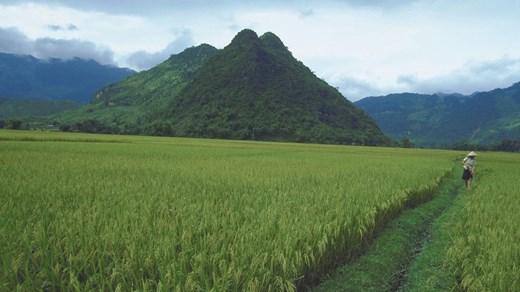 Billige rejser til Chiang Mai - Backpacking med KILROY