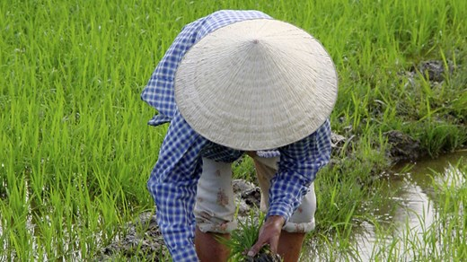 Billige rejser til Vietnam - backpacking med KILROY