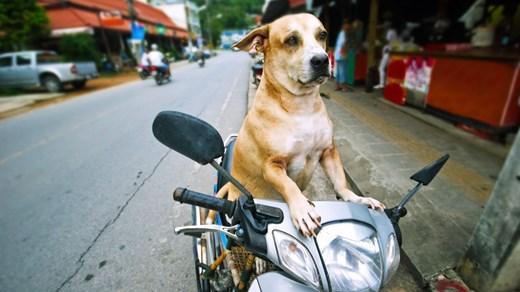Billige rejser til Phuket - Backpacking med KILROY