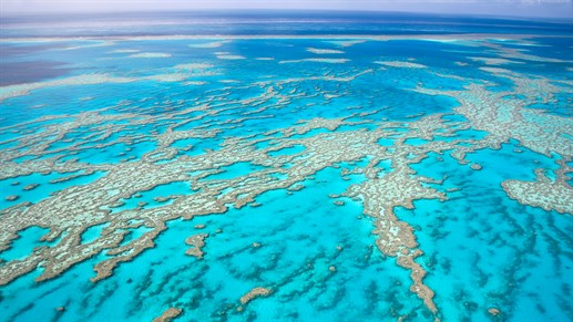 Dykning ved Great Barrier Reef
